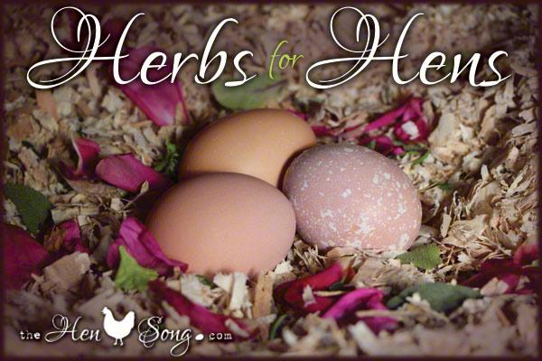 HerbsForHens_wLogo