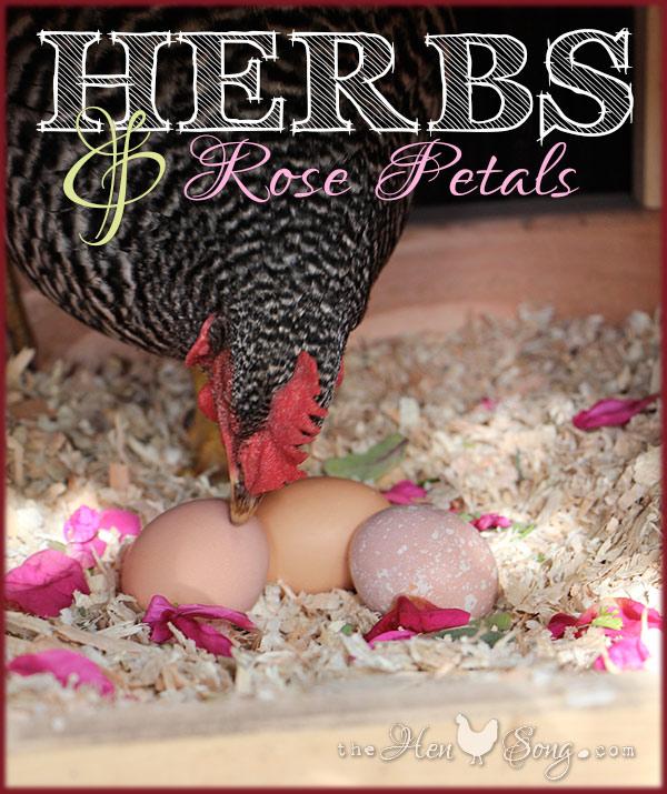 Herbs_Nellie
