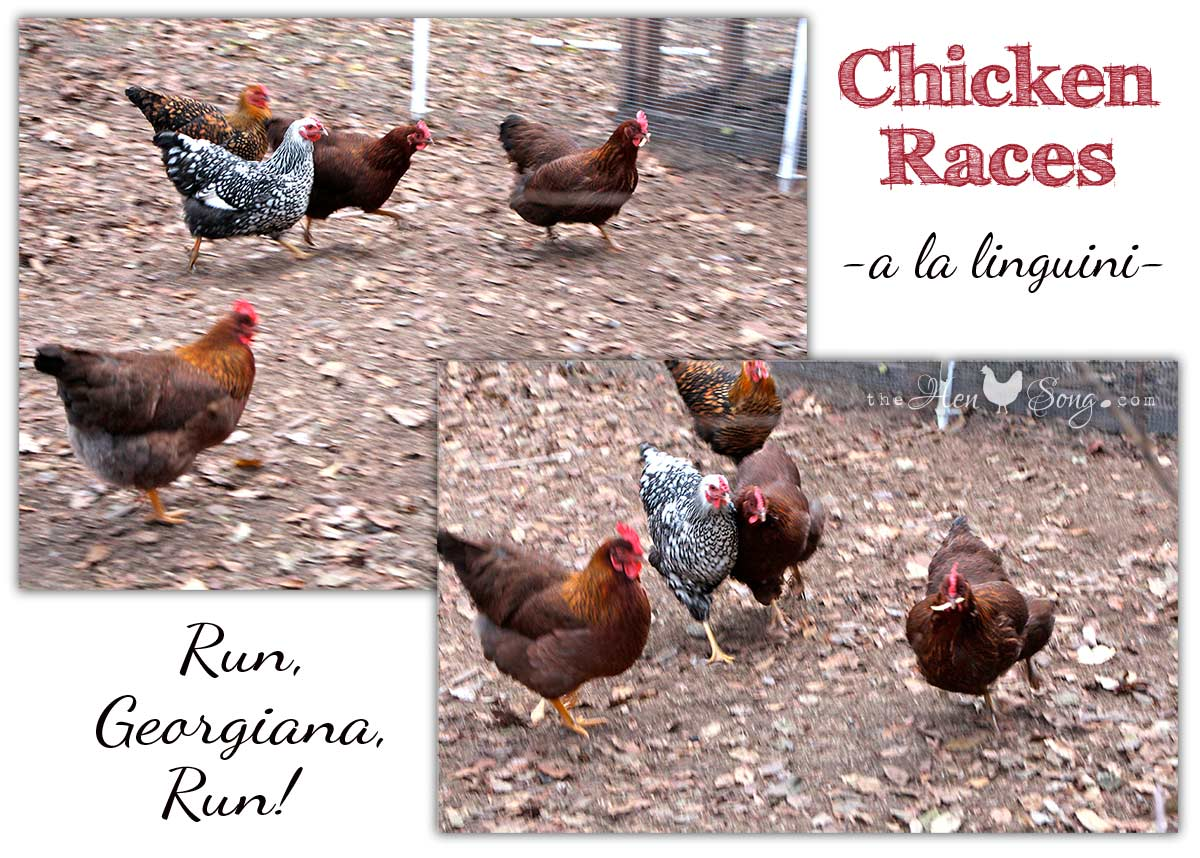 chickenRaces