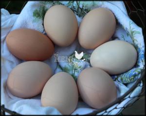 EggsInCircle